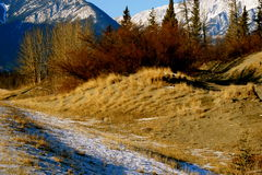 Untouched nature, canada. Jasper national park, alberta, canada, good sunny weather Royalty Free Stock Photography
