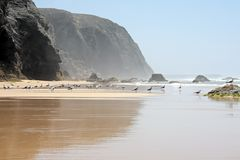 Untouched nature in Portugal. Untouched nature at the atlantic ocean in Portugal stock image