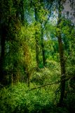Untouched nature in sunshine. Untouched Green nature in sunshine royalty free stock photography