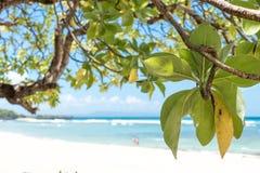 Untouched paradise tropical beach Nusa Dua on Bali island, Indonesia. Stock Photos