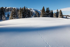 Almost Untouched Powder Snow Landscape Royalty Free Stock Photos