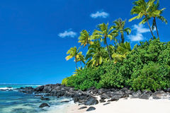 Untouched sandy beach with palms trees and azure ocean in background stock image