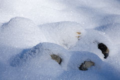Untouched snow. Soft, untouched snow in round shapes royalty free stock photos