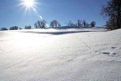 In an untouched snowy scenery Royalty Free Stock Photo