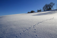 In an untouched snowy scenery Stock Images