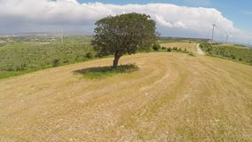 Untouched sole tree and endless green landscape, rule of nature law on planet. Stock footage stock video