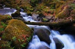 An untouched stream through Keniveil Royalty Free Stock Photos