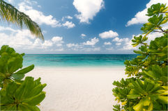 Untouched tropical beach. View to an untouched tropical beach Stock Photography