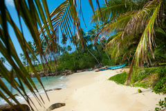 Untouched tropical beach. With palms and fishing boats in Sri-Lanka Stock Images