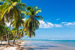 Untouched tropical beach on the Atlantic ocean in Royalty Free Stock Image