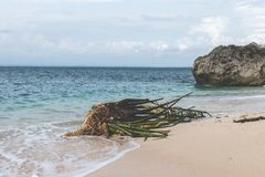 Untouched tropical beach on Bali island, Indonesia. stock photo