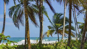 Untouched tropical beach in Bocas del Toro Panama. Untouched tropical beach in Panama Stock Photo