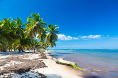 Untouched tropical beach with coconut palms in Stock Photography