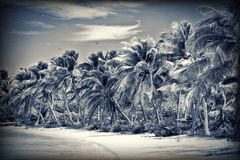Untouched tropical beach Stock Images