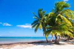Untouched tropical beach with palm trees in Stock Image