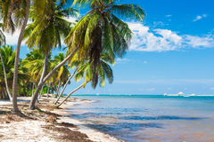 Untouched tropical beach with palm trees in Royalty Free Stock Photos