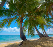 Untouched tropical beach Royalty Free Stock Image