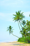 Untouched tropical beach in Sri Lanka. Beautiful beach with nobody, palm trees and golden sand. Blue sea. Summer background. Royalty Free Stock Images