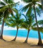 Untouched tropical beach Stock Photos