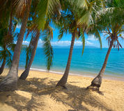 Untouched tropical beach Royalty Free Stock Photo