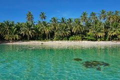 Untouched tropical shore of an island in Panama Royalty Free Stock Photos