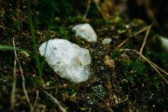 Untreated quartz in the forest stock image