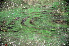 Unuque木绿色五颜六色的纹理 免版税库存图片