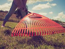 Unusual angle of woman raking leaves. Using rake. Person taking care of garden house yard grass. Agricultural, gardening equipment concept royalty free stock images