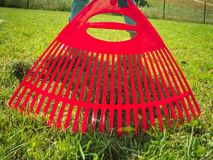 Unusual angle of woman raking leaves. Using rake. Person taking care of garden house yard grass. Agricultural, gardening equipment concept royalty free stock photo