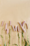 Unusual beautiful natural  pink flowers on craft background, spa Royalty Free Stock Photography