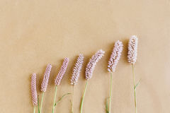 Unusual beautiful natural  pink flowers on craft background, spa Royalty Free Stock Images