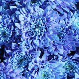 Unusual Beautiful tender blue flowers background Stock Photos