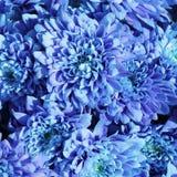 Unusual Beautiful tender blue flowers background Stock Photos
