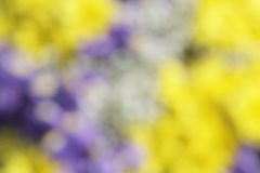 Unusual Beautiful tender colorful flowers blurred background Stock Photo
