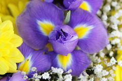 Unusual Beautiful tender iris and yellow flowers background Royalty Free Stock Photos