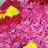 Unusual Beautiful tender pink and yellow flowers background Stock Image