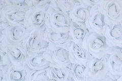 Unusual Beautiful tender white flowers background Royalty Free Stock Images