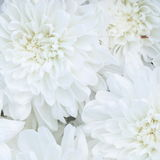 Unusual Beautiful tender white flowers background Stock Photo
