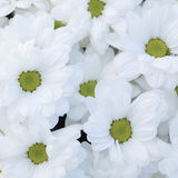 Unusual Beautiful tender white flowers background Stock Photos