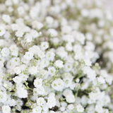 Unusual Beautiful tender white flowers background Stock Images