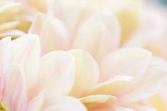 Unusual Beautiful tender white and pink flowers background Stock Photo