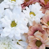 Unusual Beautiful tender white and pink flowers background Royalty Free Stock Photos