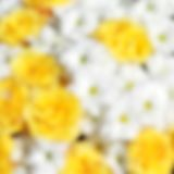 Unusual Beautiful tender white and yellow flowers blurred background Royalty Free Stock Images