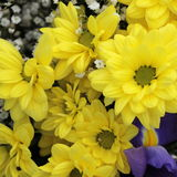 Unusual Beautiful tender yellow flowers background Stock Images