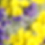 Unusual Beautiful tender yellow flowers blurred background Royalty Free Stock Photography