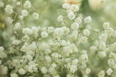 Unusual Beautiful white flowers background Stock Image