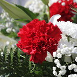 Unusual Beautiful white and red flowers background Stock Images