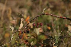 Unusual berries, mountain berries, macro world Stock Photo