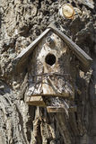 Unusual bird house Royalty Free Stock Image