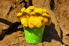 unusual bouquet Stock Images